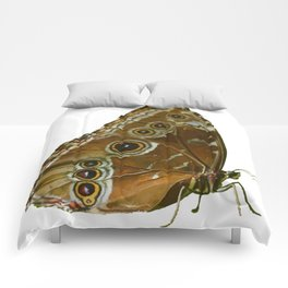 Beautiful Butterfly Wings of Meadow Brown Isolated Comforters