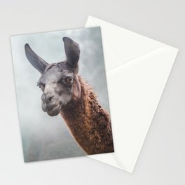 Curious, wise looking guanaco / llama on a misty morning in the Andes mountains, Peru Stationery Cards