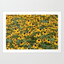 Field of Brown Eyed Susans Art Print