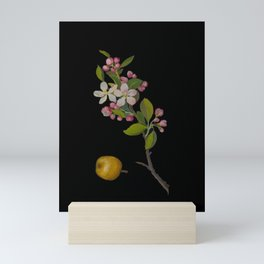 Pyrus Malus Mary Delany Delicate Paper Flower Collage Black Background Floral Botanical Mini Art Print