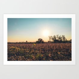 Corn field at sunset in the countryside of Lomellina Art Print