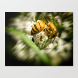 Pollen and a Bee. Canvas Print