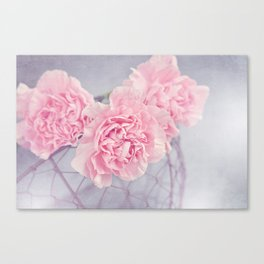 Pale Pink Carnations Canvas Print