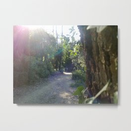 Path through the forest (sun over the trees) Metal Print