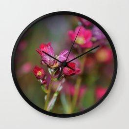 Pink Aubrieta Wall Clock