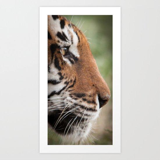Tiger Portrait Art Print