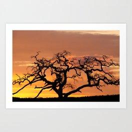 Acacia Trees at Dusk Art Print
