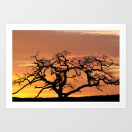 Acacia Trees at Dusk Art Print