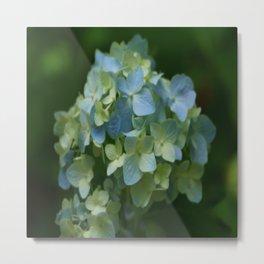 Blue Hydrangea - Painterly Style Metal Print