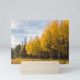 Birch Trees Rocky Mountain Colorado, United States Mini Art Print