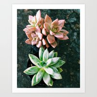 plants Art Prints featuring Plants by Yellow Barn Studio