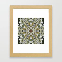Lacy Serviceberry kaleidoscope - Amelanchier 0033 k5 Framed Art Print