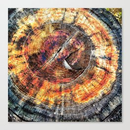 Tree Stump Ring Circle Canvas Print