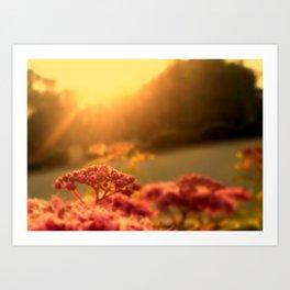 Pink bulb in the Sunrise Art Print