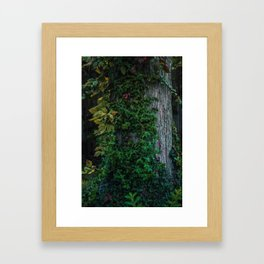 Ivy upon the Tree (Color) Framed Art Print