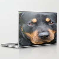 rottweiler Laptop & iPad Skins featuring Beautiful Female Rottweiler Portrait Vector by taiche