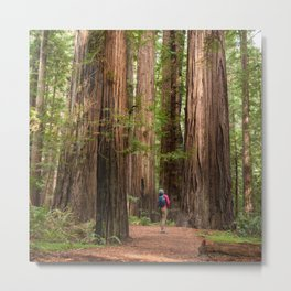 Humboldt Redwoods, Avenue of the Giants Photography, Redwood Forest Art, Person in Photo Art, Enchanted Magical Woodland Metal Print