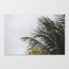 palm treee Canvas Print