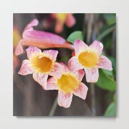 Tangerine Beauty Cross Vine - Three Plus One Metal Print