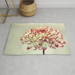 Hold onto the light - A chrysanthemum flower in window light Rug