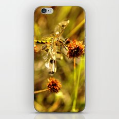 Black-tailed Skimmer Dragonfly iPhone Skin