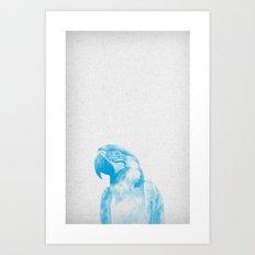 Parrot 01 Art Print