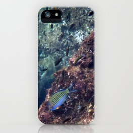 Lined Surgeonfish iPhone Case