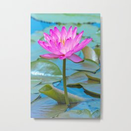 Pink Water Lily Flower - Nature Photography Metal Print