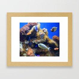 Photo 49 Aquarium Framed Art Print