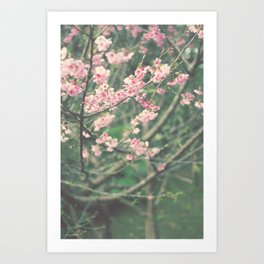 Sakura Trees Art Print