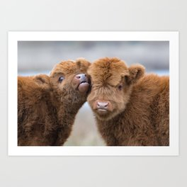 Young highland cows | Nature photography |  Animals in the wild | Photo art Art Print