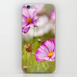 Bunch of Cosmos Bipinnatus flowers iPhone Skin