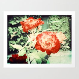 Textured Chicago Peace Rose Art Print