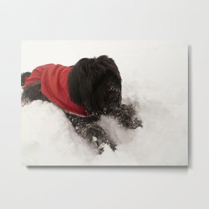 Briard in the Snow Metal Print