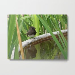 Black Phoebe at the Fountain Metal Print