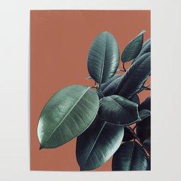 Ficus Elastica #17 #AutumnLeaf #foliage #decor #art #society6 Poster