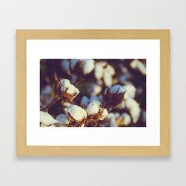 Cotton Field 18 Framed Art Print