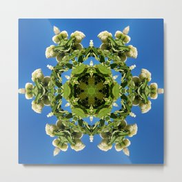 Hydrangea kaleidoscope - white flowers, green leaves, blue sky 161134 k6 Metal Print