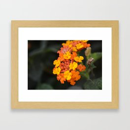 Orange and Yellow Framed Art Print