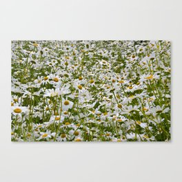 White and Yellow Daisies Canvas Print