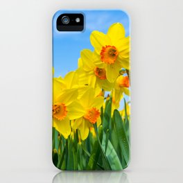Golden daffodil narcisus flowers vibrantly coloured against bright blue sky iPhone Case