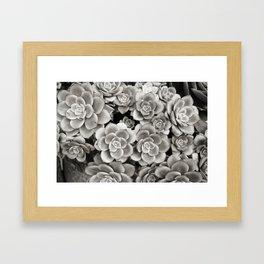 Summer Succulents, B&W Framed Art Print