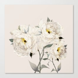 White Peonies Canvas Print