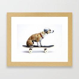 Skate Punk - Skateboarding Chihuahua Dog inTiny Helmet Framed Art Print