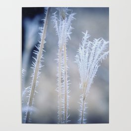 Cold Hoarfrost on the weeds in the winter Poster