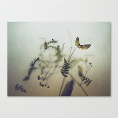 pine wings Canvas Print