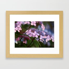 Blooming Rose Blue and Red Hydrangea Hortensia Flowers Framed Art Print