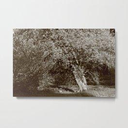 Holly Tree Metal Print