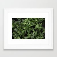 weed Framed Art Prints featuring Weed by Vyacheslav Sizov