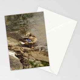 Summer Mallards Stationery Cards